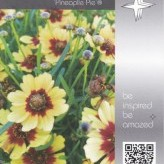 Coreopsis ´Pineaplle Pie´ ®
