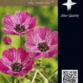 Geranium 'Jolly Jewel Lilac' ®