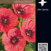 Geranium 'Jolly Jewel Salmon' ®