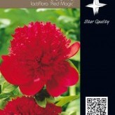 Paeonia (LD) 'Red Magic'