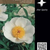 Paeonia (LE) 'White Wings'