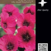 Geranium 'Jolly Jewel Raspberry' ®