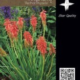 Kniphofia 'Redhot Popsicle' ®